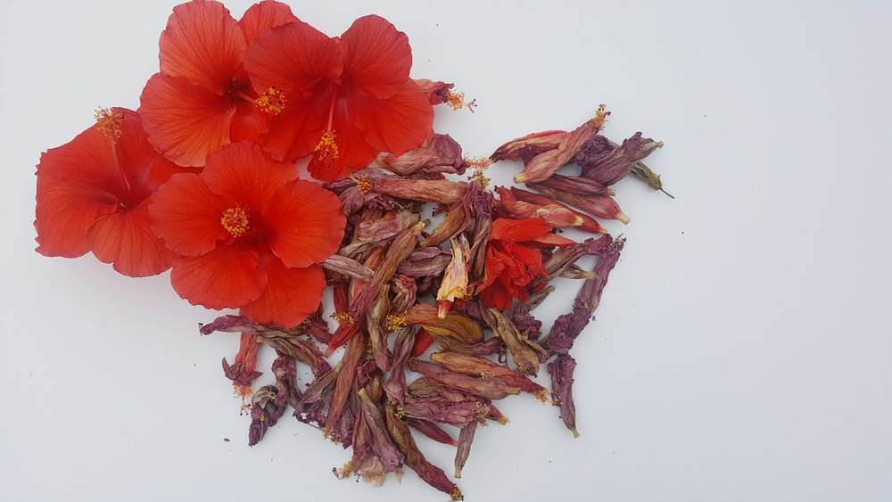 Total Hibiscus flowers used in the dye pot.