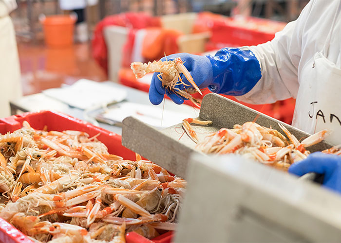 our-process-langoustine.jpg