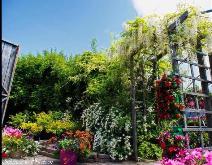 mabou gardens darthmouth.jpg