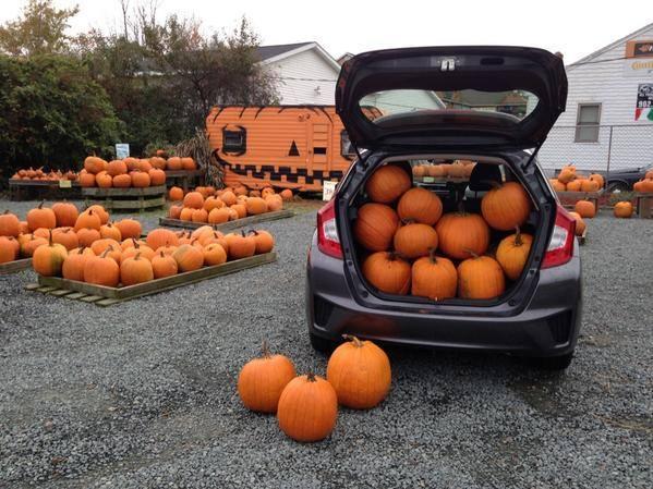 mabou gardens pumpkins 2.jpg