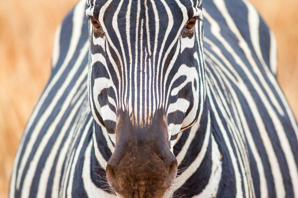 Tanzania - Serengeti Park