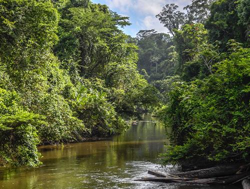 Amazônia Lixo Zero - branding e ativação