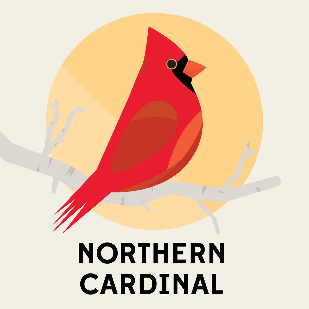 birds_of_the_blue_ridge_northern_cardinal.jpg