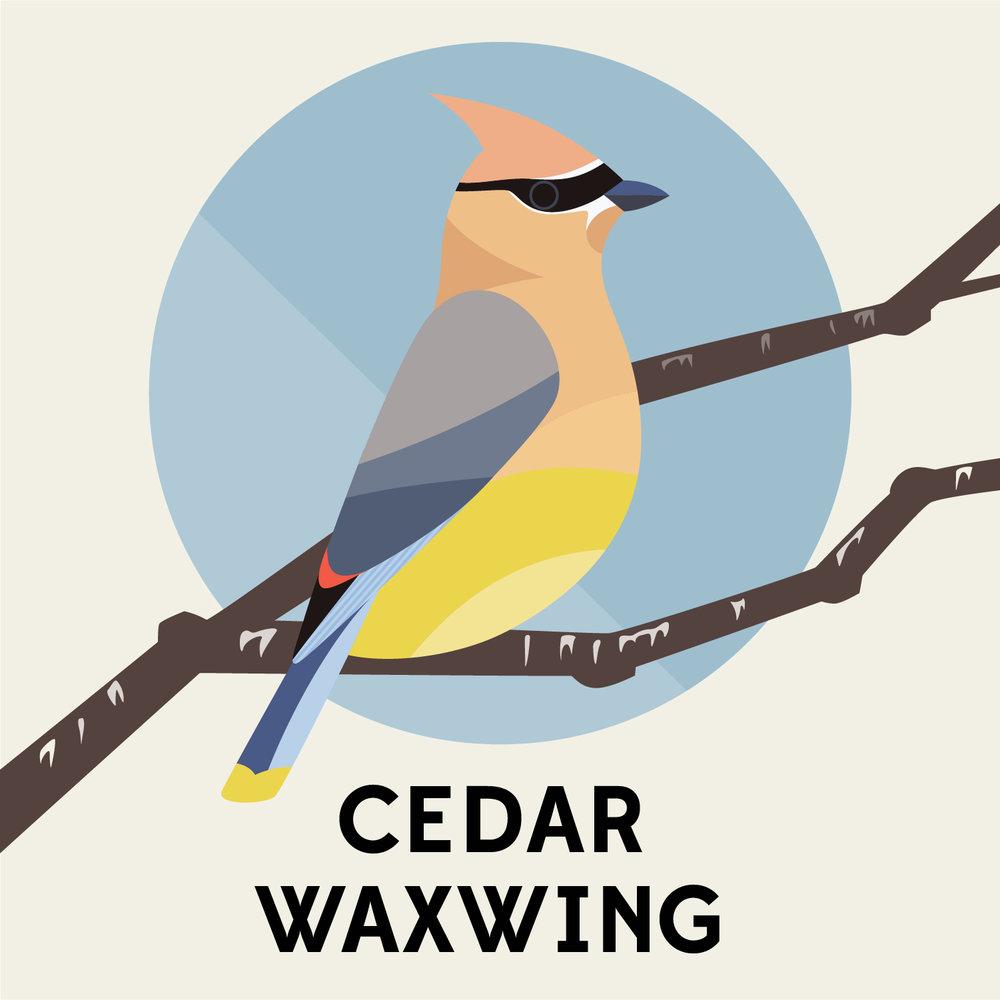 birds_of_the_blue_ridge_cedar_waxwing.jpg