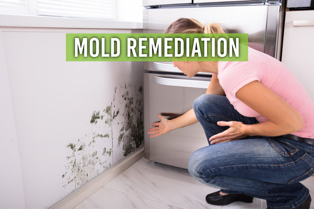 MOLD REMEDIATION BANNER.jpg