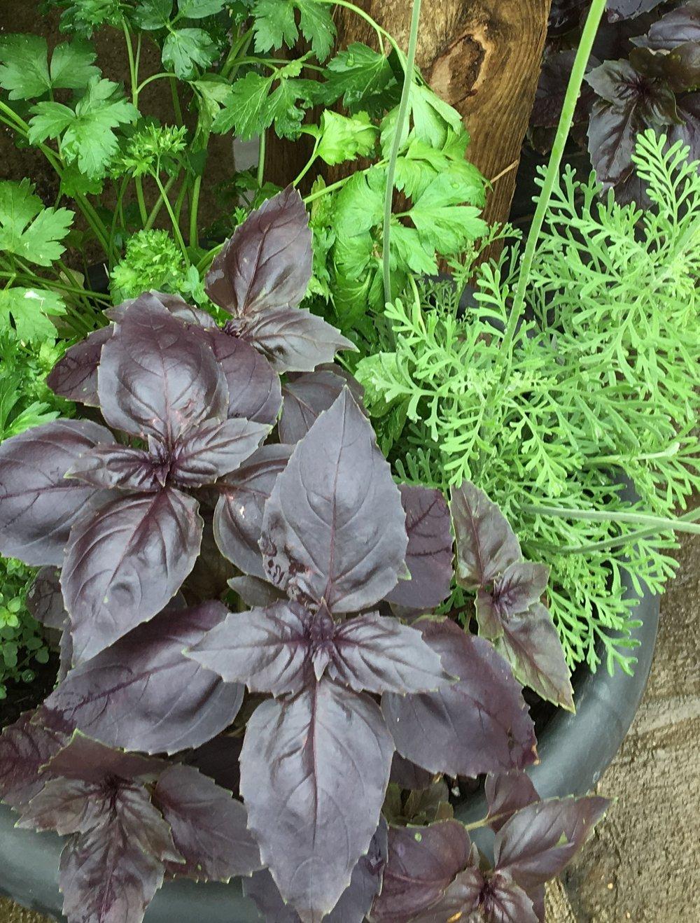 Herbs (2).JPG