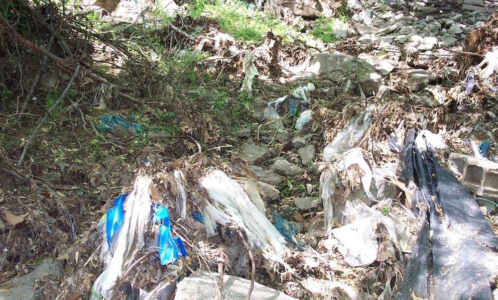 Water Pollution: Trash in Bishop Creek, 2004