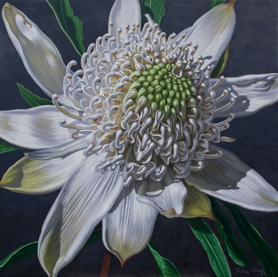 White Waratah on Indigo