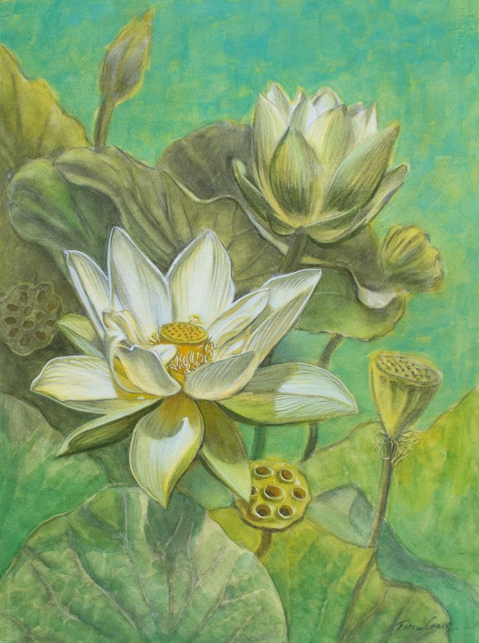 White Lotuses in Turquoise Pond