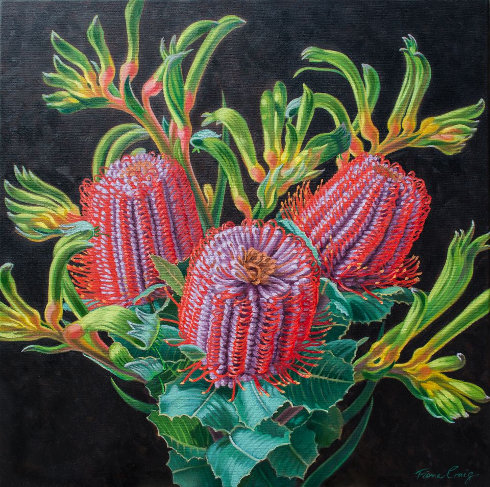 Scarlet Banksias and Kangaroo Paws