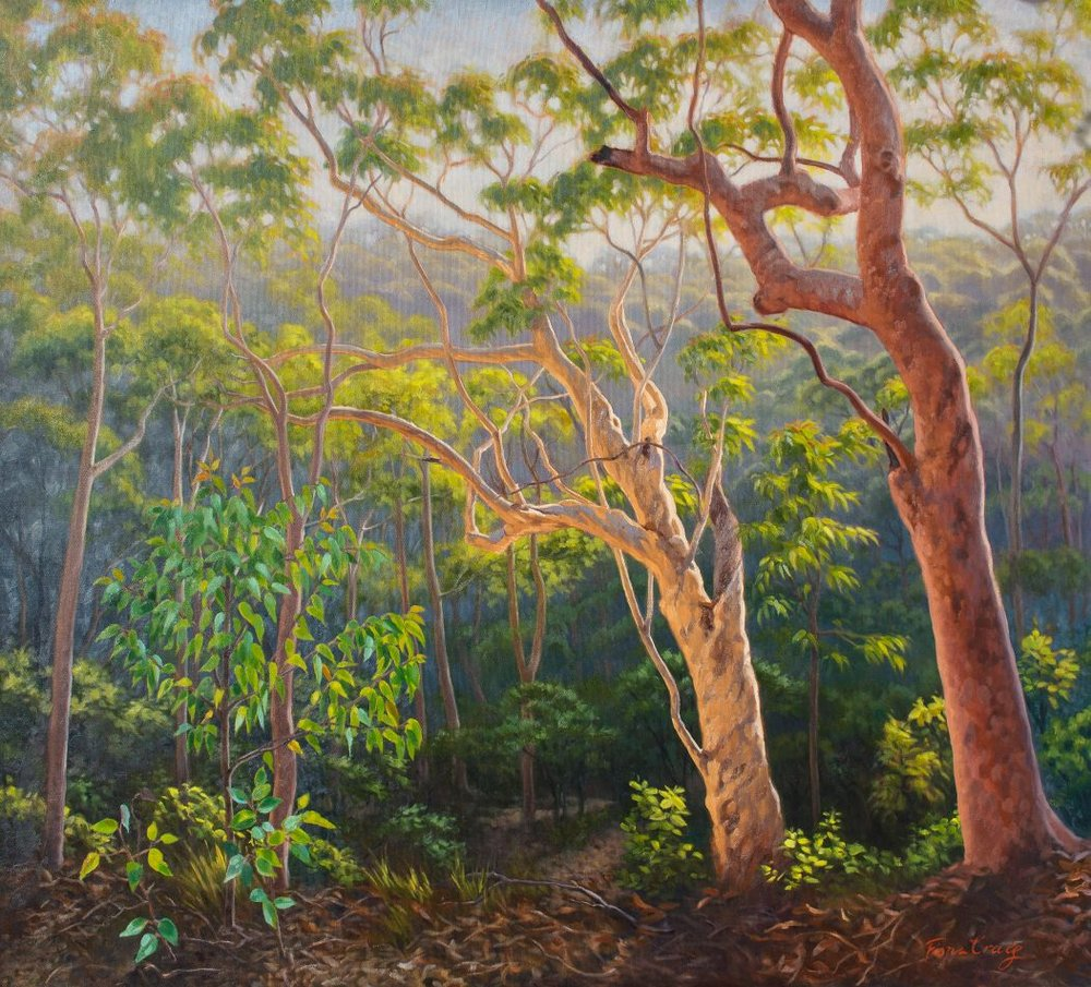 "Sunlit Morning, Blue Mountains - Oil on canvas, 40"" x 40"" / 101.5 cm x 101.5 cm. Early morning sunlight streams through mist, casting highlights on the Eucalyptus foliage and trunks. This landscape painting was inspired by a bush-walk behind my family home in The Blue Mountains, Australia."