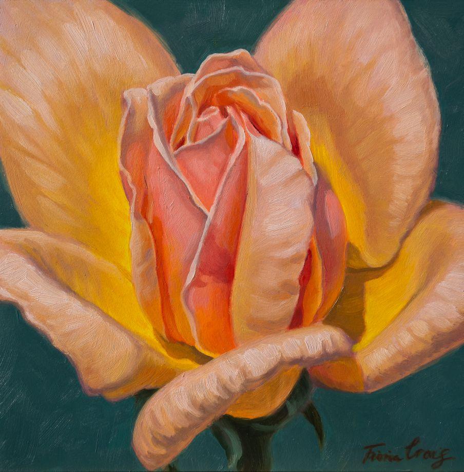 Sunlit Rose, 6