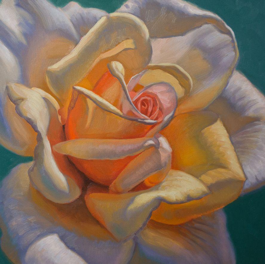 Sunlit Rose, 1
