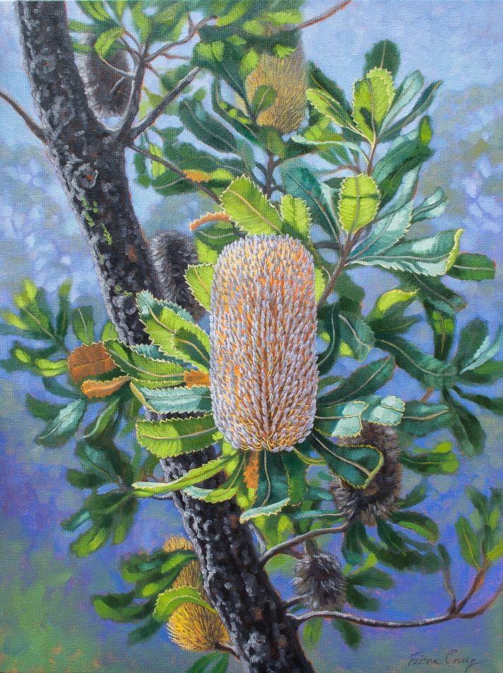 Blue Mountaiins Banksias