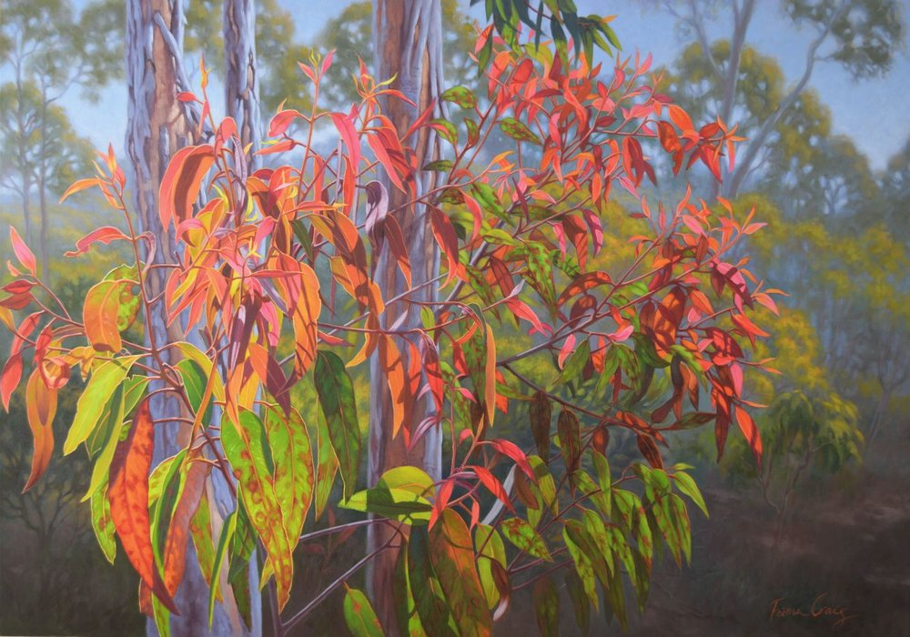 Red Gumleaves in the Blue Mountains
