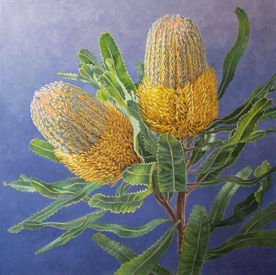 Golden Banksias