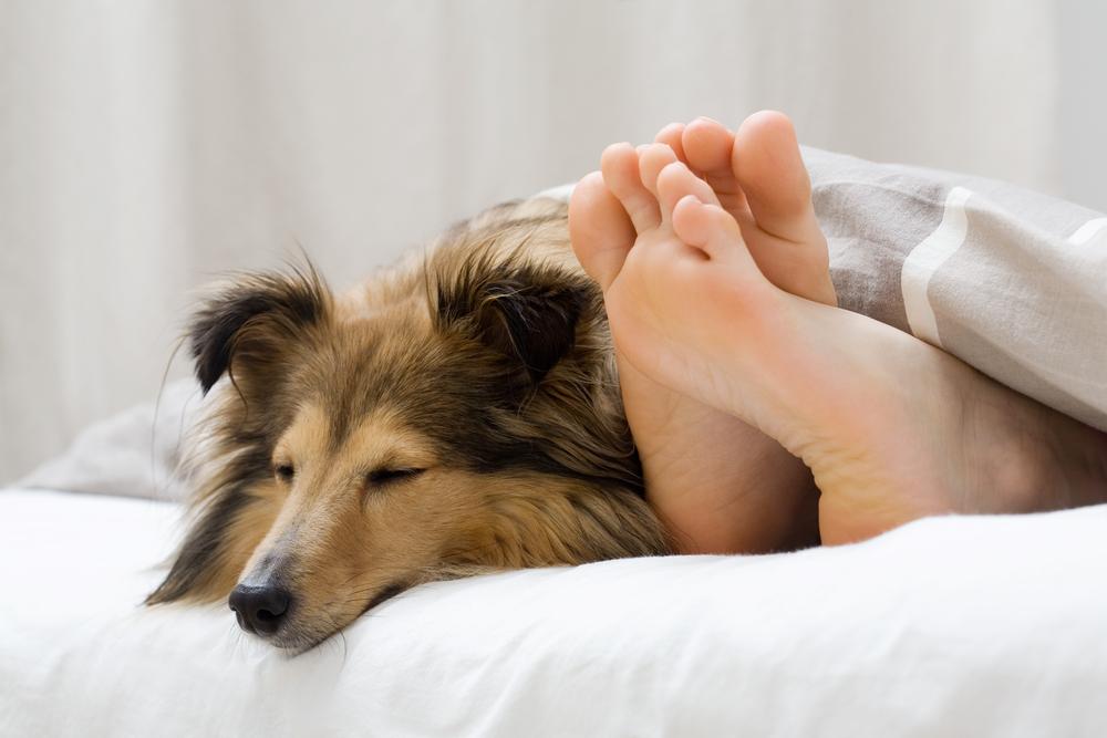 dog-in-bed-2.jpg