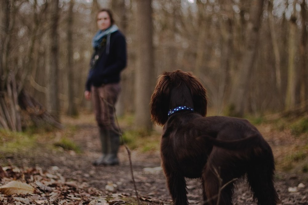 dog-in-woods-2.jpg