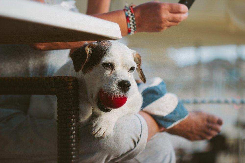 dog-with-ball-2.jpg