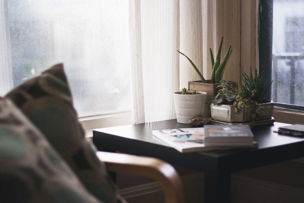 houseplants (2).jpg