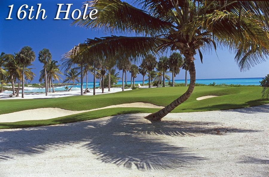 H16 palmtree.jpg