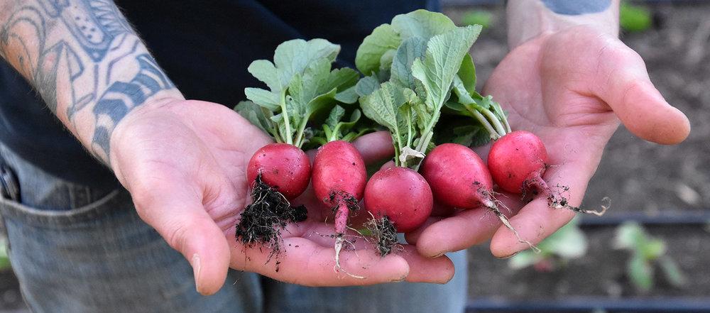 organic-veggie-farm.jpg