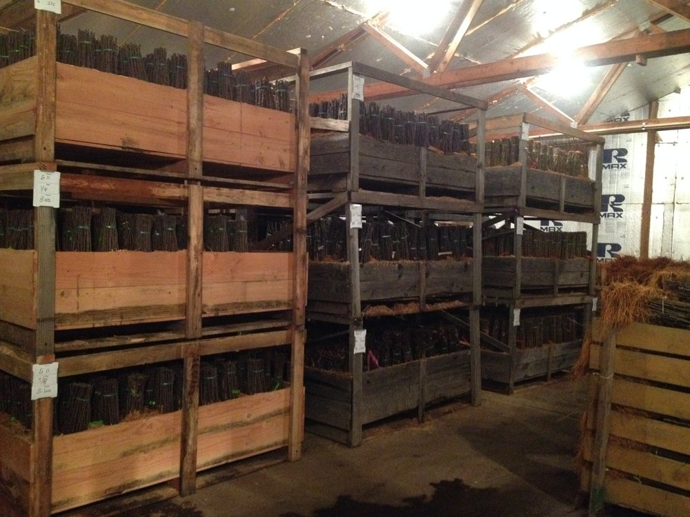 storage bins.JPG