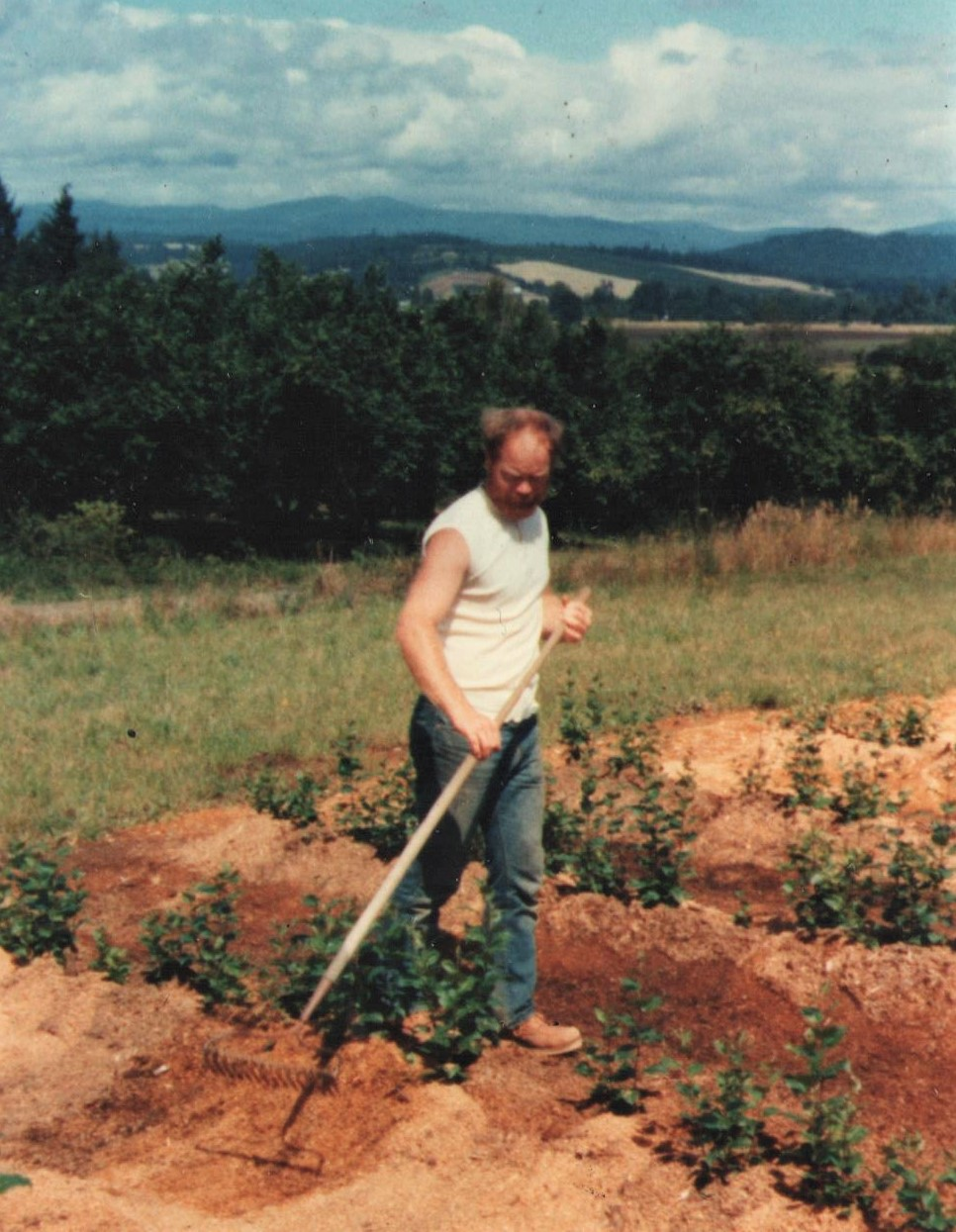 Christopher Dolby (Dad), circa 1983, mounding rootstock beds with sawdust to encourage healthy root growth.