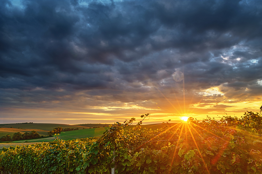 Vineyard Climate - With a view of what's happening under the ground, let's now capture what's going on above the ground.Included in our Smart Soil Starter Pack is a weather station, giving you accurate vineyard weather forecasts, conditions and historical data, all in our integrated vinehub platform.