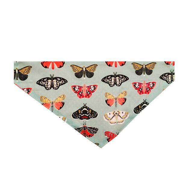 butterfly flat.jpg