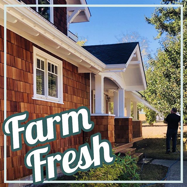 From gray to yay! This beautiful cedar shake farmhouse needed a fall refresh and we could not be happier with the results. 🤗🍁 Copy & paste the link to see more     www.cubicftpressurewashing.com/our-projects-1/ #cubicft #pressurewashing #letswashit #housewash #farmfresh #cedarshakes #florenceoregon