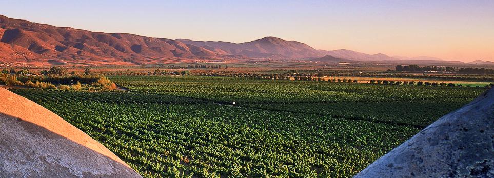wine valley.jpg