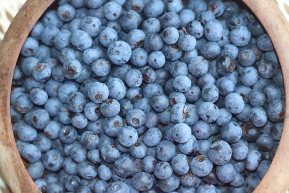 Blueberries | Gallon clamshell $25