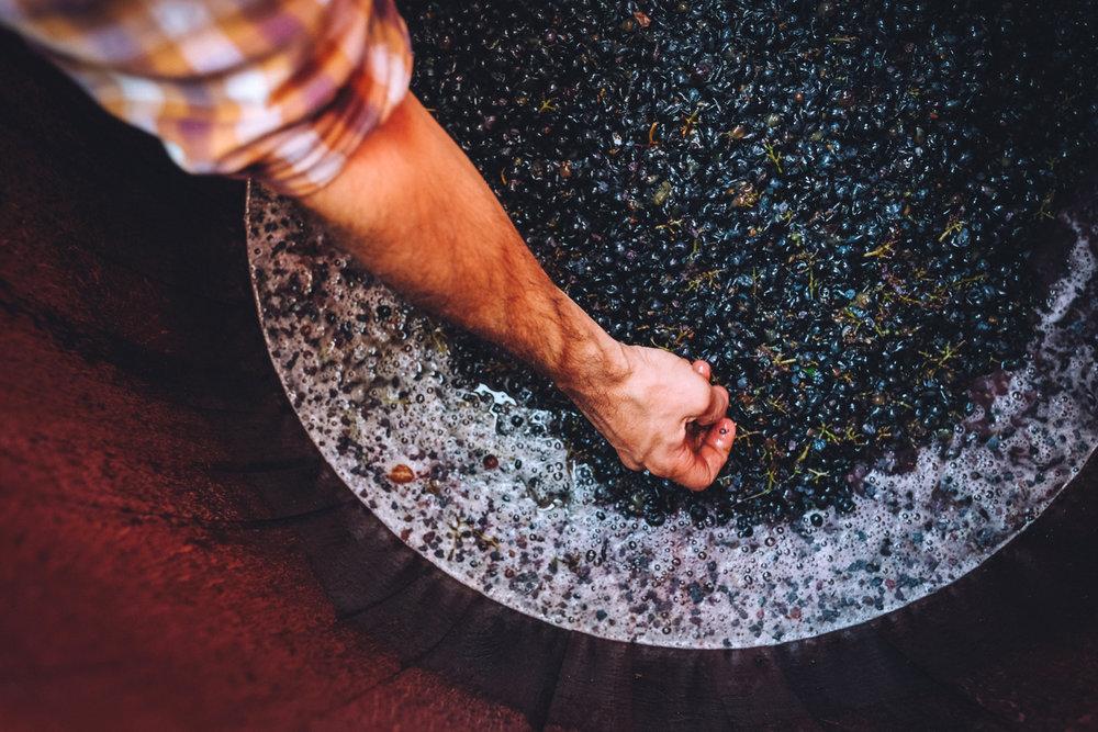 À la cave - Nous pensons qu'un bon vin se fait avant tout par le travail de la vigne. Dans cet esprit, nous n'utilisons qu'un minimum d'intrants dans nos vinifications, et chaque intervention est pensée comme l'affinage d'une matière brute, sans jamais chercher à modifier le caractère initial de chaque millésime.