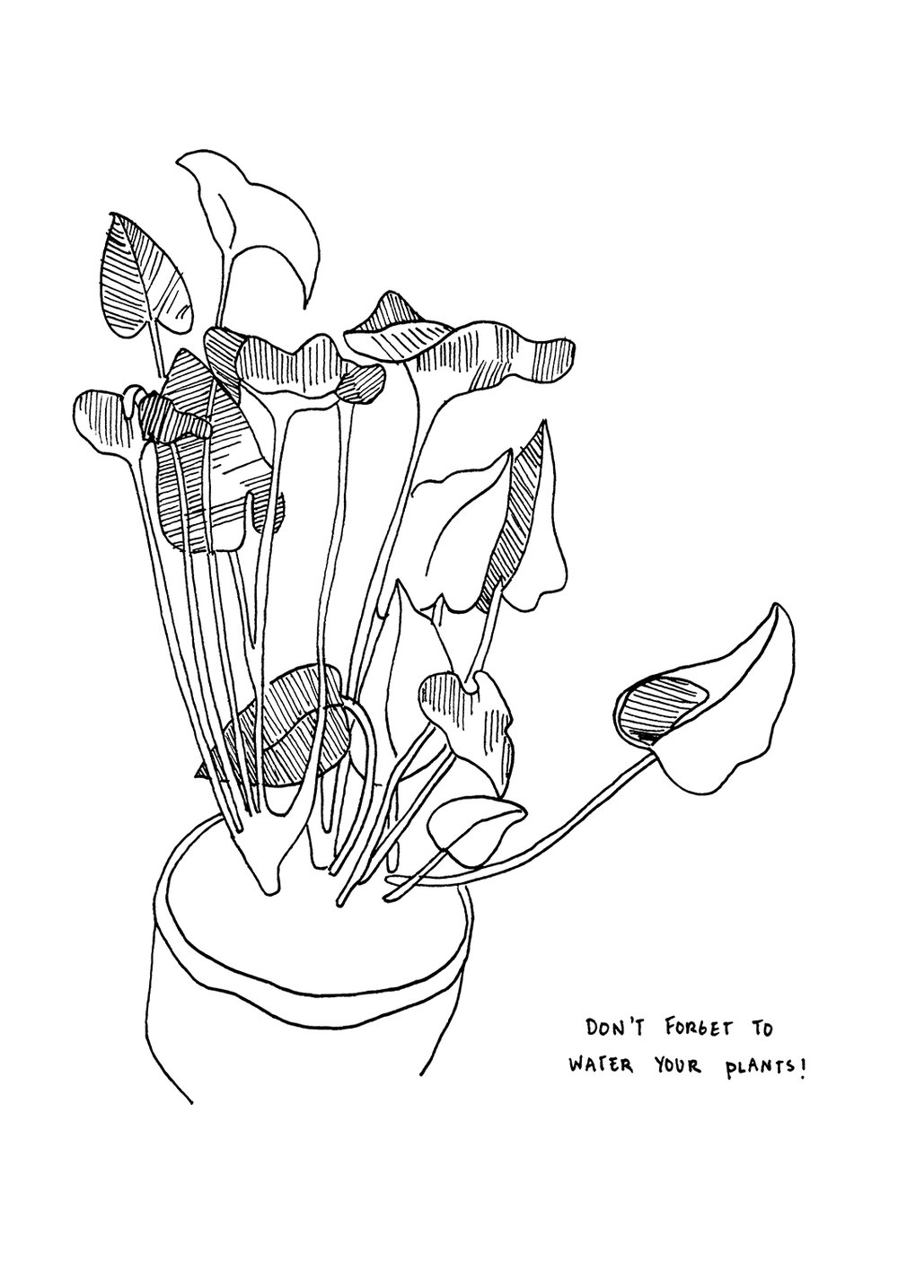 Harriet_Water your plants_A4_V1 copy.jpg