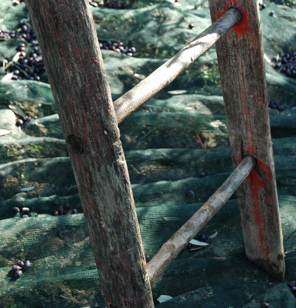 ladder-sq.jpg