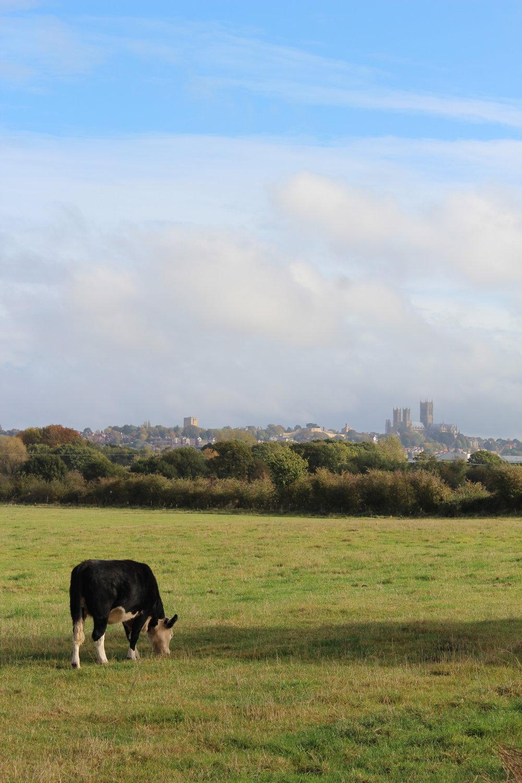 A Lincolnshire Scene