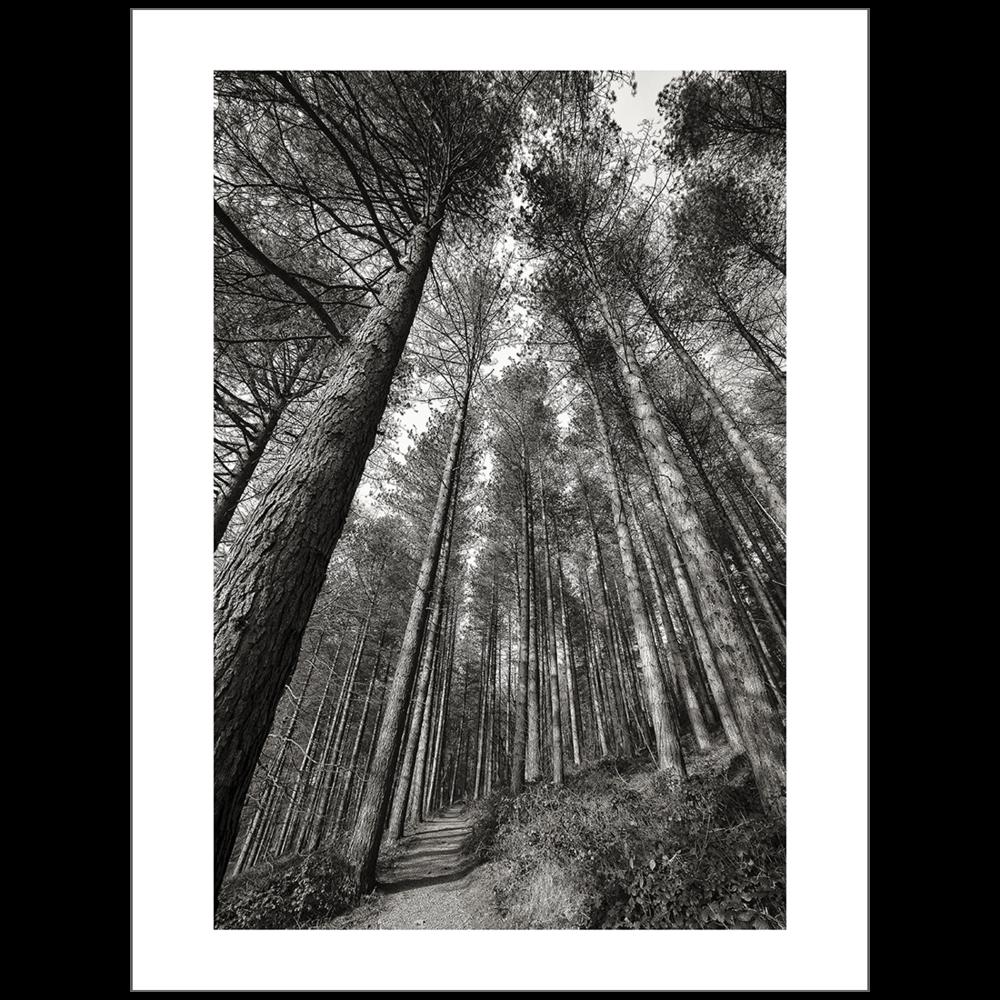 Woodland Travels