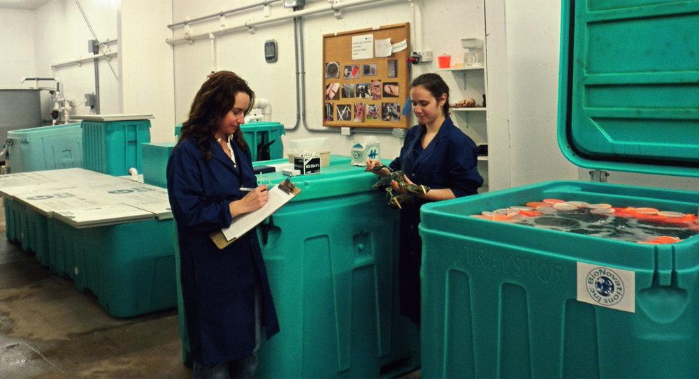 Marine Research Center,Petit-de-Grat, Nova Scotia (Photo by: Université Sainte-Anne)