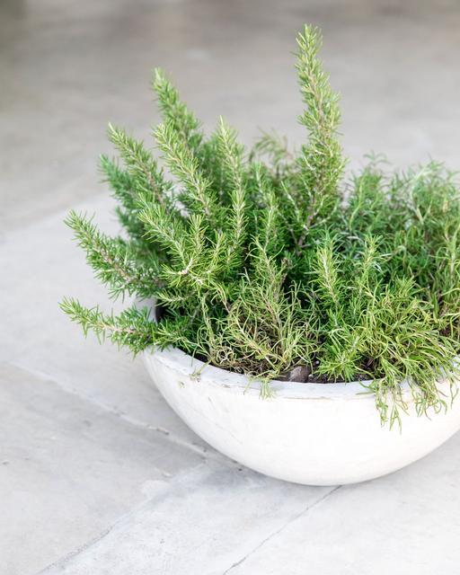 resin_planter.jpg