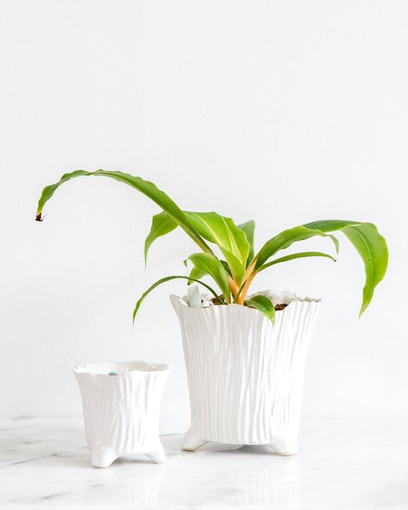 https://shop.designroots.com/collections/planters/products/olivia-pot-large-by-garden-inspired-living