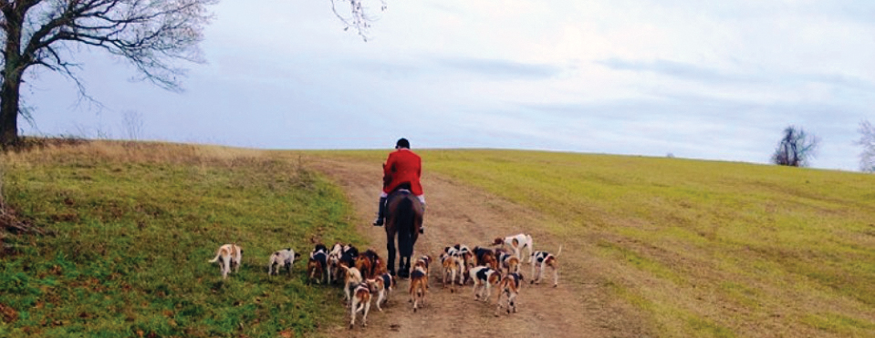 Equestrian lifestyle with rider on horse and pack of foxhounds hunting on trail
