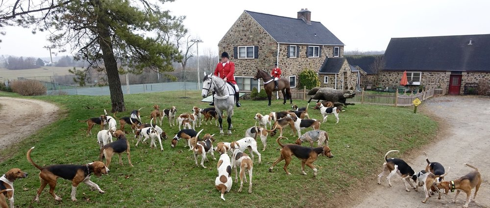Hunting foxhounds and riders on horses in front of old stone farmhouse