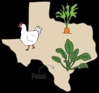 Texas-Illustration-e1463210964997.png