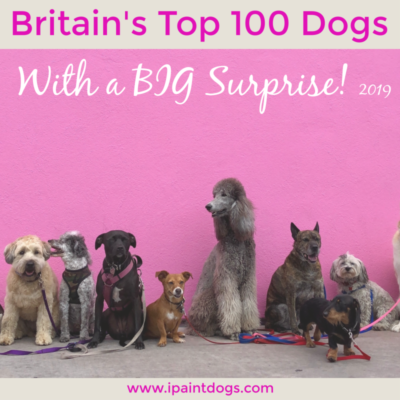 Britains Top 100 Dogs for 2019.  ipaintdogs.com
