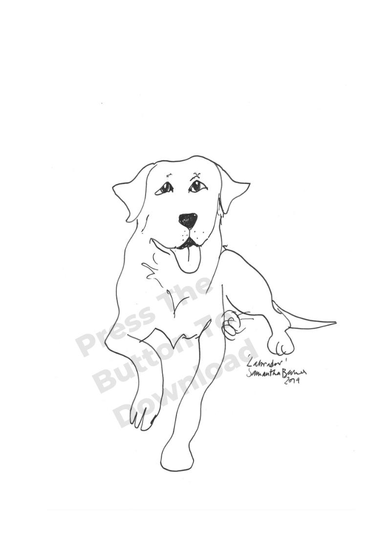 Labrador Line Drawing by Samantha Barnes, ipaintdogs.com