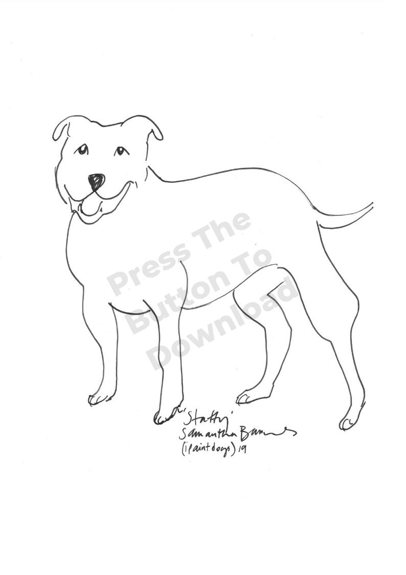 Staffy Dog Line Drawing by Samantha Barnes Artist, ipaintdogs.com