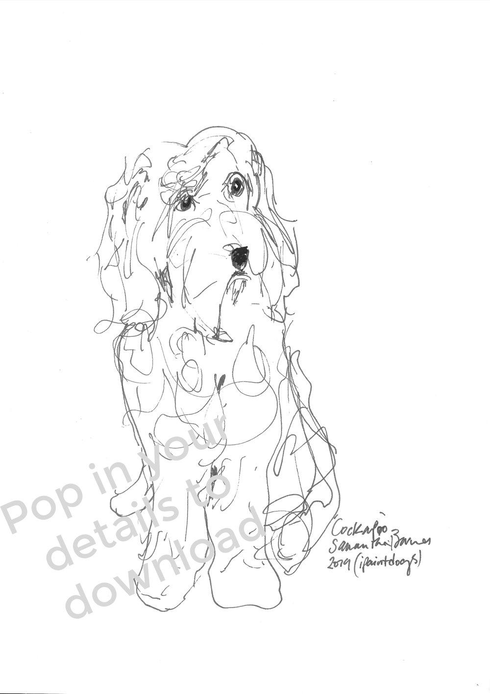Cockapoo Line Drawing by Samantha Barnes, ipaintdogs.com Top 3 dogs.jpg