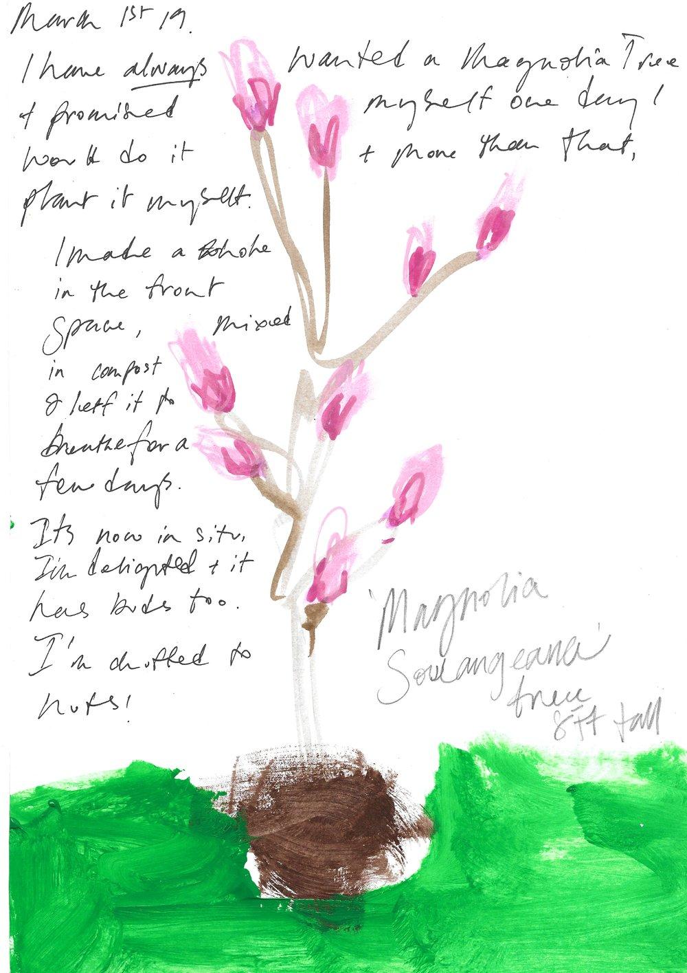 Magnolia Tree, A Visual Diary of a NON Gardener, Simply having a go.  Samantha Barnes Artist