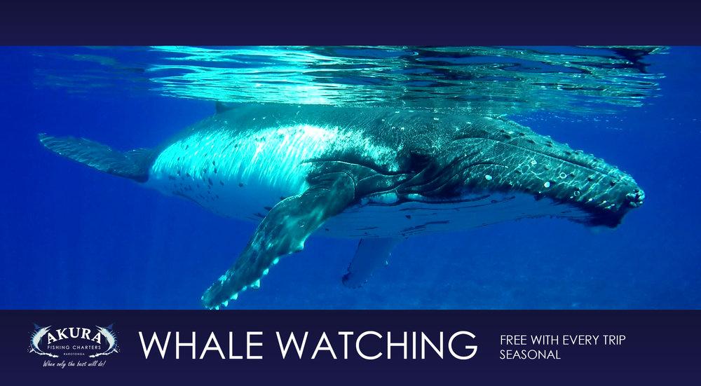 6. Whales.jpg